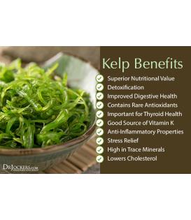 Premium Kelp Powder